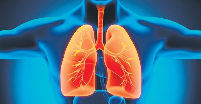 Tout savoir sur l'appareil respiratoire