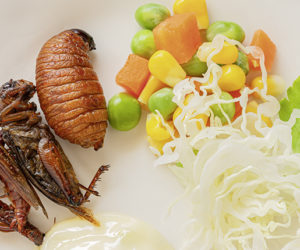 Fried Worm, Insect food with vegetable salad in the white bowl.